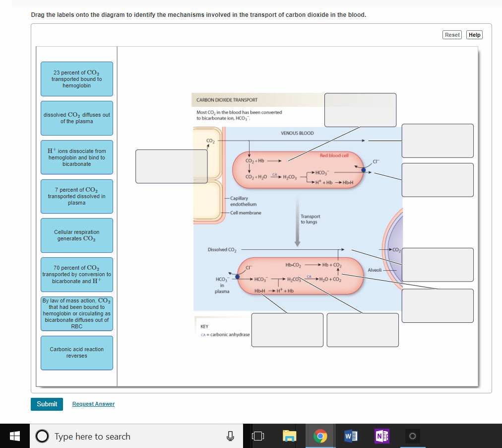 Anatomy and physiology archive april 03 2018 chegg drag the labels onto the diagram to identify the mechanisms involved in the transport of carbon nvjuhfo Image collections