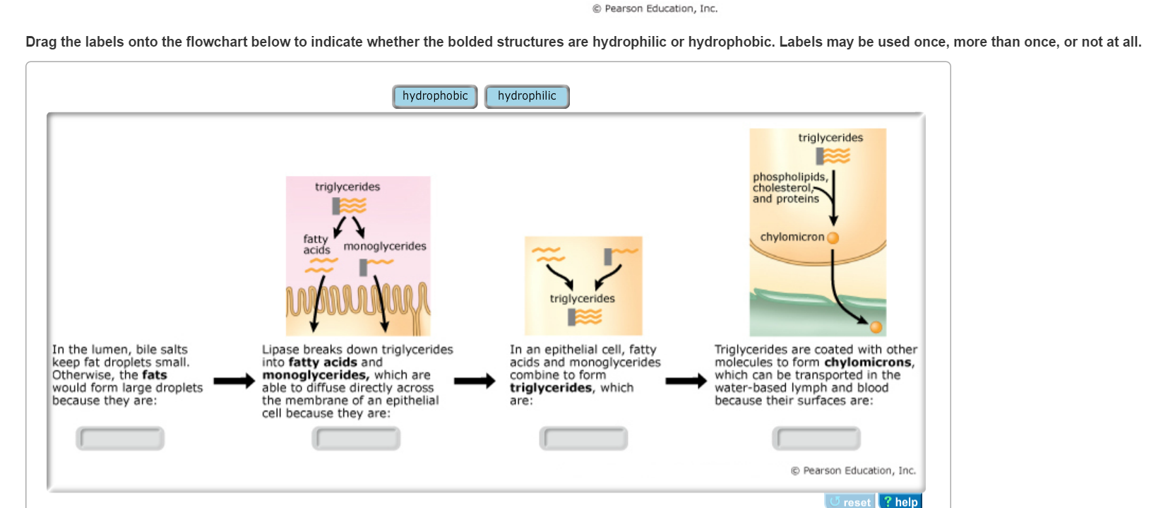 Solved Mastering Biology How Does Water Solubility Relate