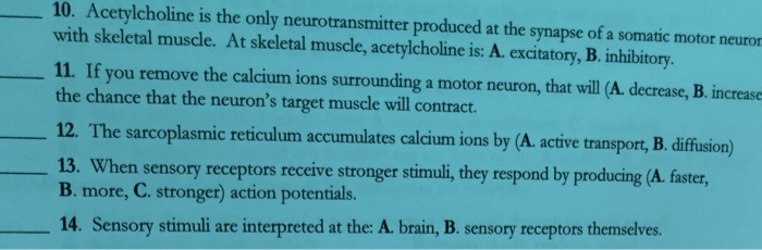 the neurotransmitter released by all somatic motor nerves is