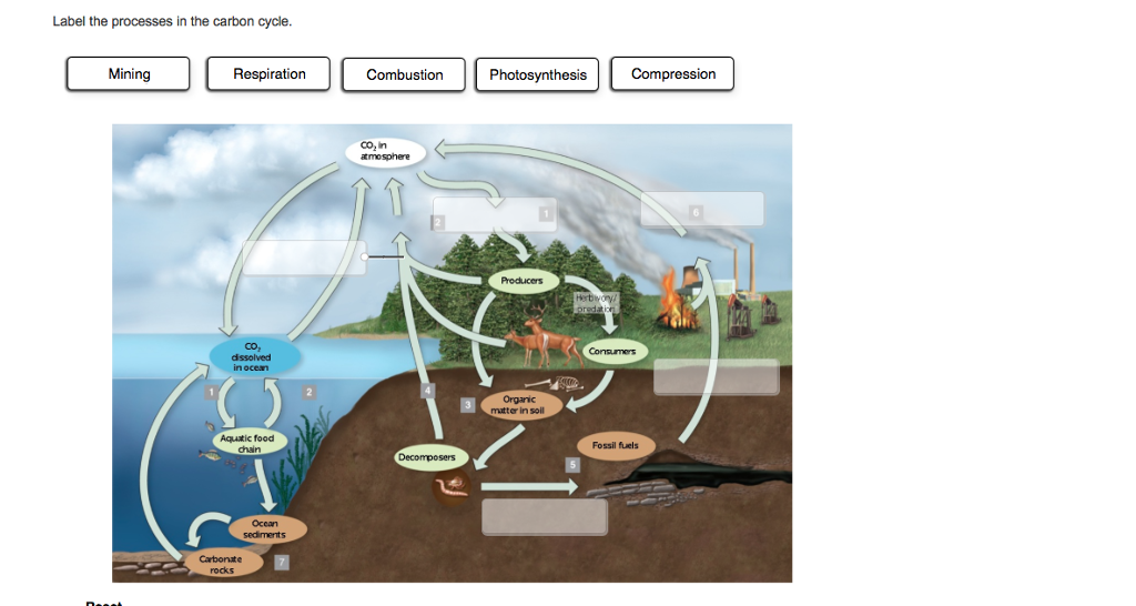 Solved label the processes in the carbon cycle chegg label the processes in the carbon cycle mining respiration aquatic food ocean rocks combustion compression ccuart Choice Image