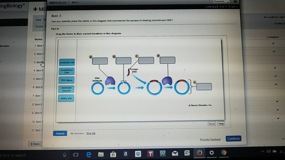 Can You Correctly Place The Labels In This Diagram That Summarizes The Process Of Dna Profiling.Biology Archive November 12 2017 Chegg Com