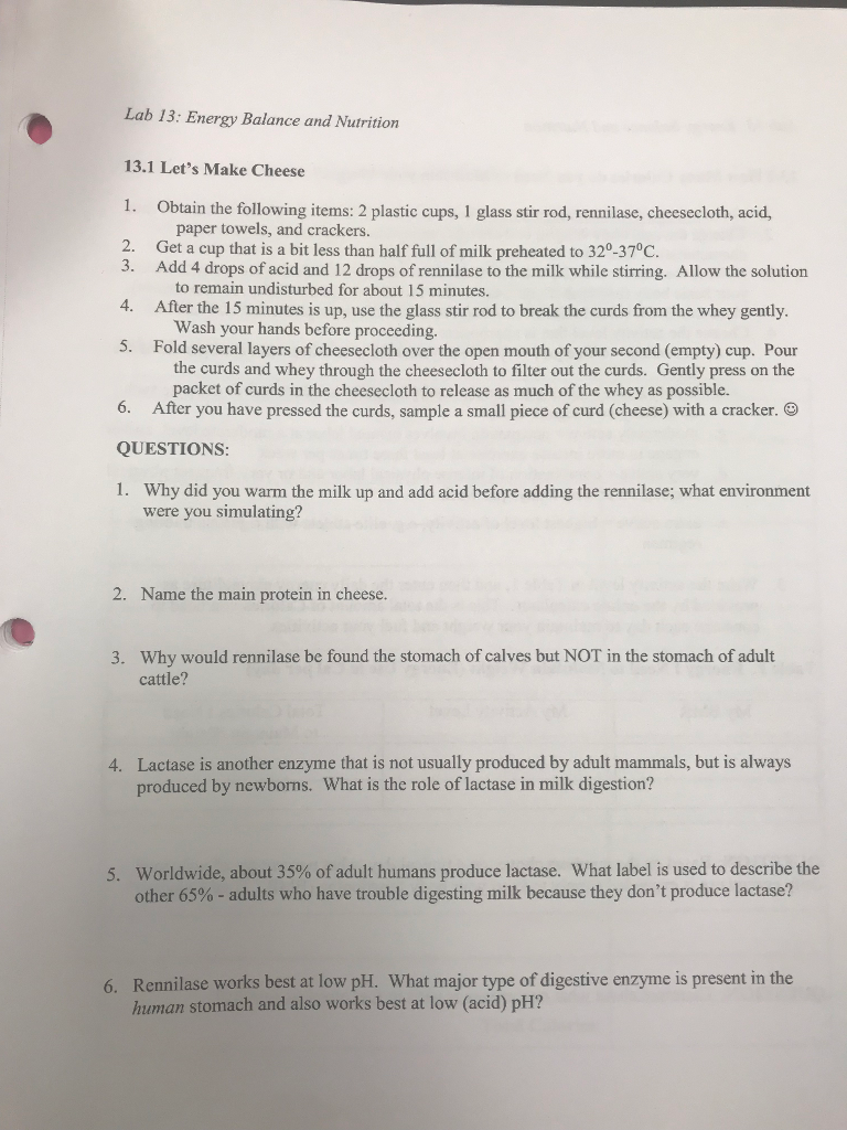 cheese making lab report