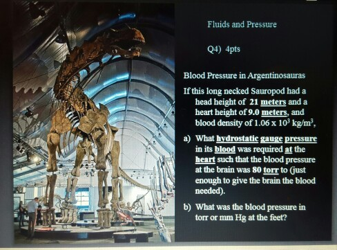 Fluids and Pressure Q4) 4pts Blood Pressure in Argentinosauras If this long necked Sauropod had a head height of 21 meters and a heart height of 9.0 meters, and blood density of 1.06 x 103 kg/m a) What hydrostatic gauge pressure in its blood was required at the heart such that the blood pressure at the brain was 80 torr to Gust enough to give the brain the blood needed) b) What was the blood pressure in torr or mm Hg at the feet?