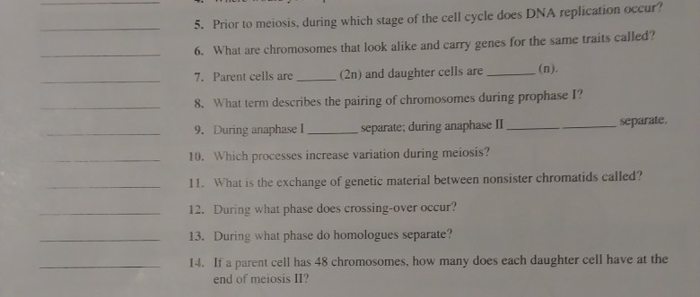 Solved 5 Prior To Meiosis During Which Stage Of The Cel Chegg Com