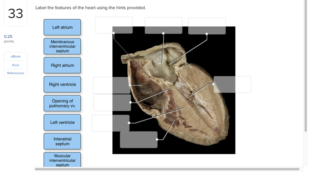 Solved: Label The Features Of The Heart Using The Hints Pr ...