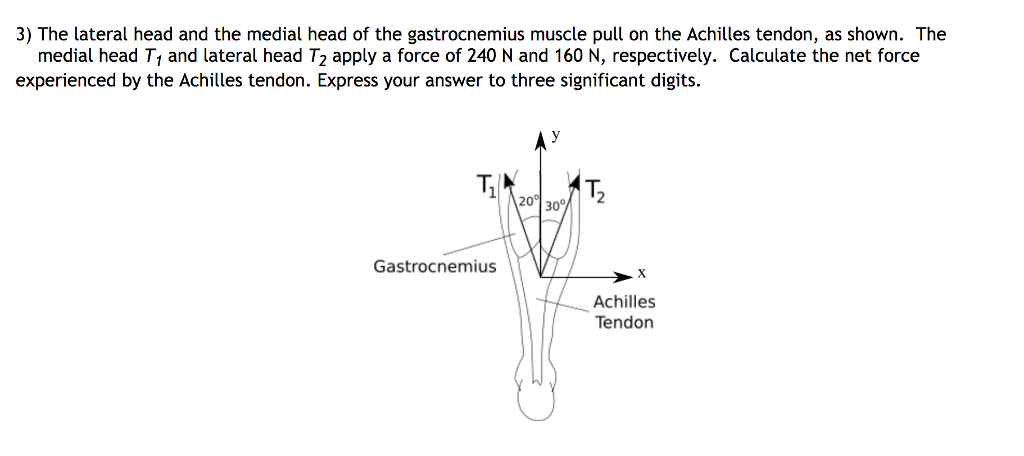 Solved: 3) The Lateral Head And The Medial Head Of The Gas ...