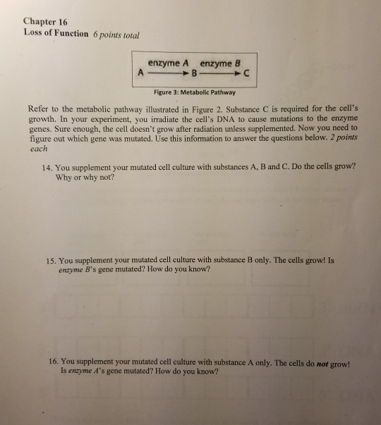 Solved: Chapter 16 Loss Of Function 6 Points Total Enzyme