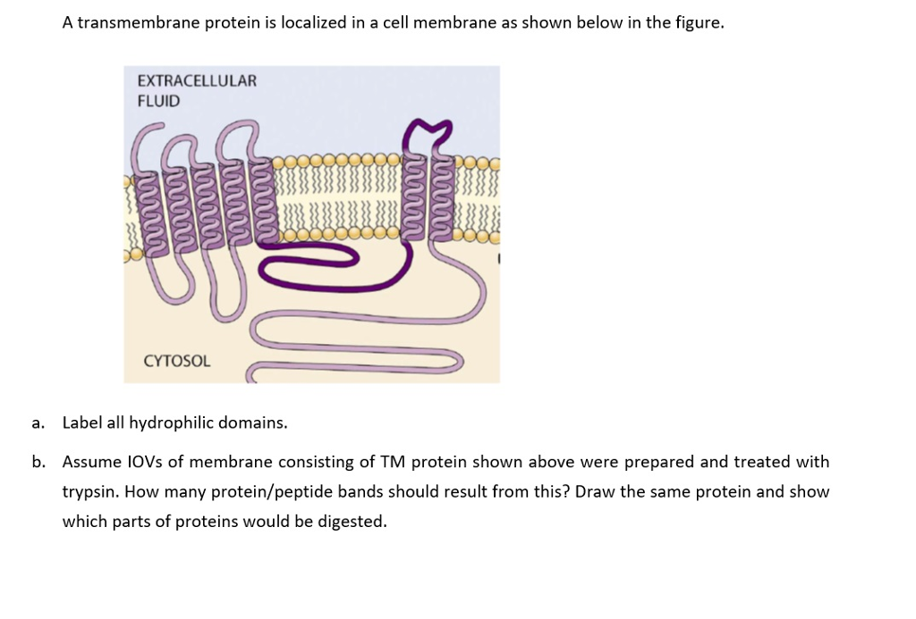 a plasmodesmata localized protein media Protein science (5671) mobile plasmodesmata: channels for intercellular signaling during plant growth and development by: iris sevilem 1, shri ram yadav 1, yk helariutta 1 2 abstract: full text | plasmodesmata (pd.