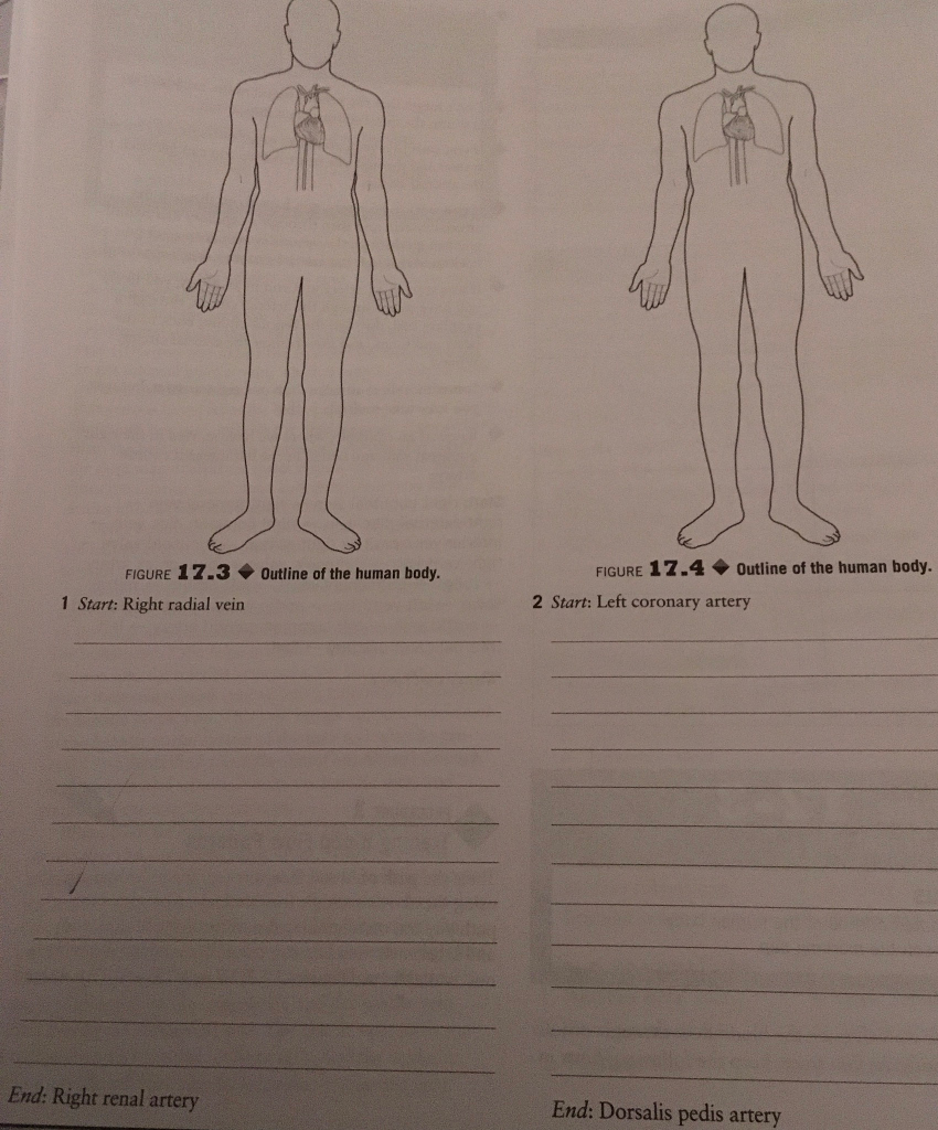 Solved Figure 173outline Of The Human Body Figure 17 4o