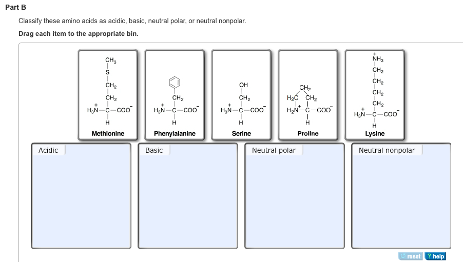 Solved part a classify these amino acids as acidic basic part c altavistaventures Images