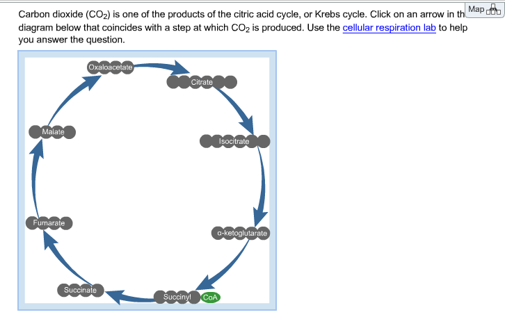 Solved Carbon Dioxide Co2 Is One Of The Products Of The