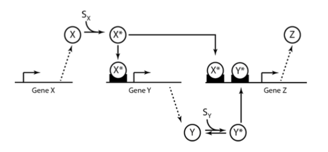 In a typical regulation of gene transcription in b chegg questions ccuart Image collections