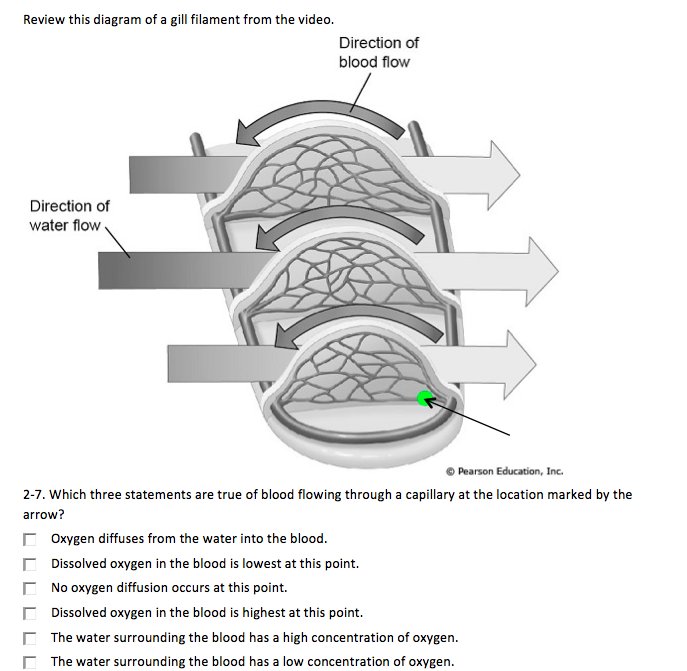 Diagrams Of Blood Flow Fish - House Wiring Diagram Symbols •