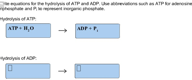 Solved Write Equations Tor The Hydrolysis Of Atp And Adp