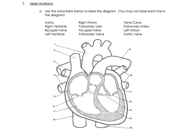Solved  Heart Anatomy A  Use The Word Bank Below To Label