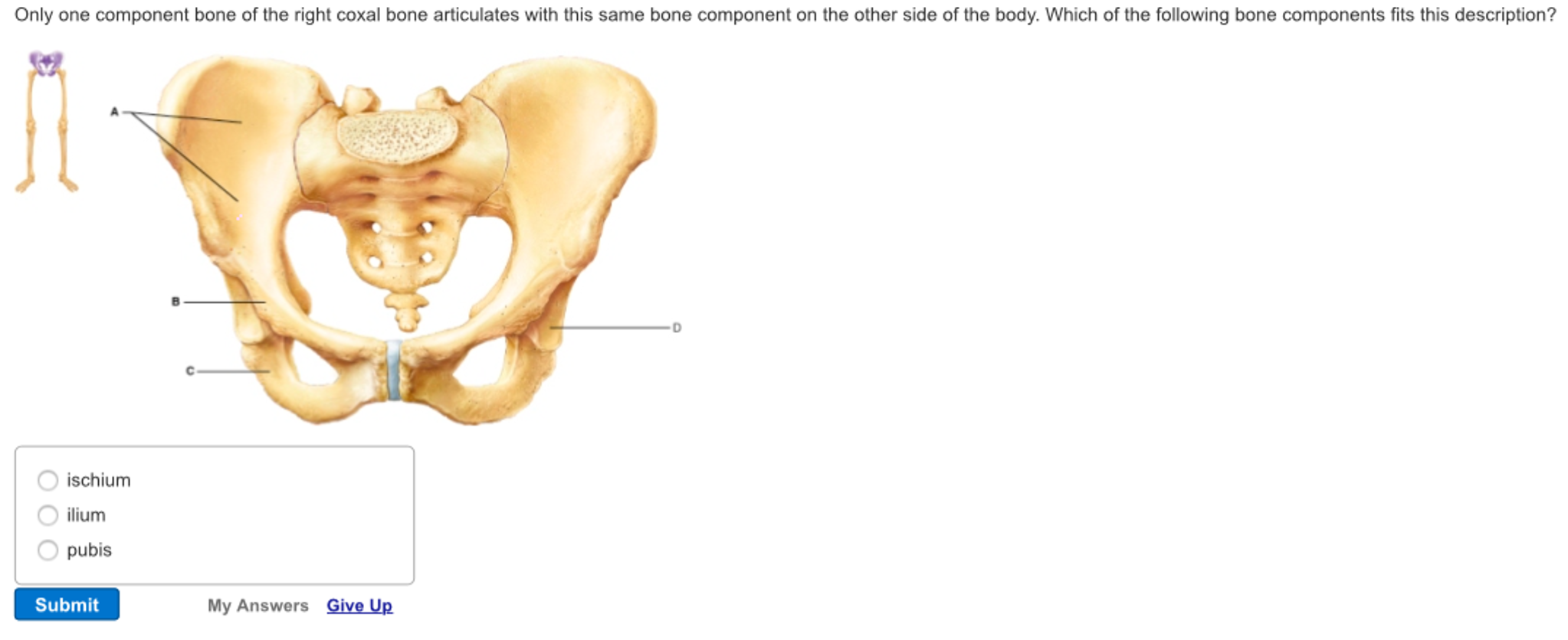 Solved Only One Component Bone Of The Right Coxal Bone Ar