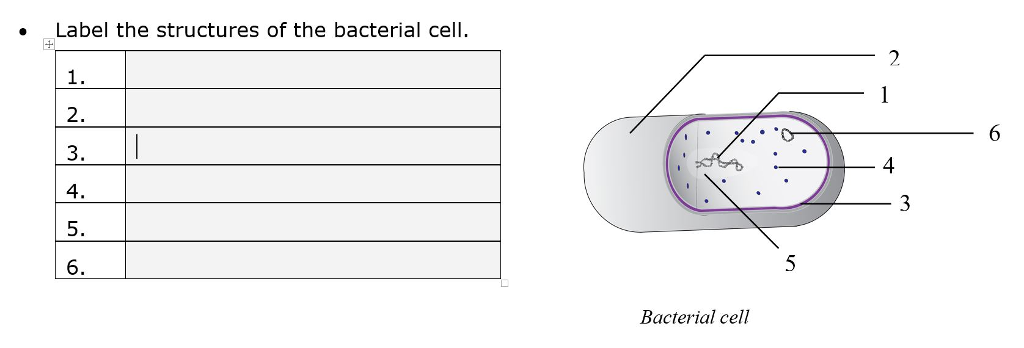 Solved label the structures of the bacterial cell 2 3 label the structures of the bacterial cell 2 3 4 4 6 bacterial ccuart Image collections