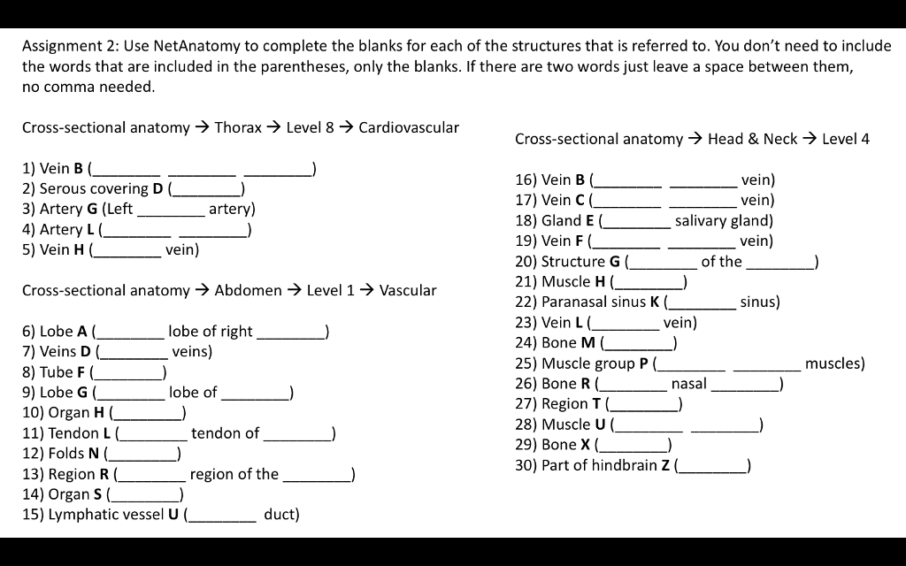 Solved: Cross-sectional Anatomy → Head & Neck-) Level 4 He ...