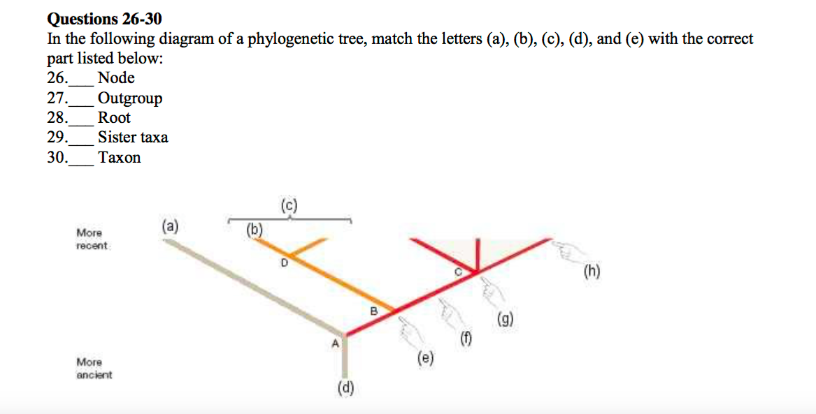 In The Following Diagram Of A Phylogenetic Tree M Chegg