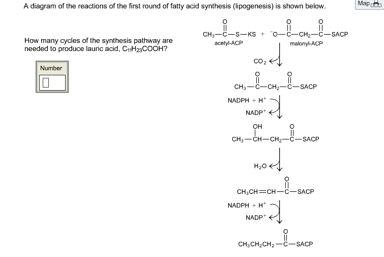 A Diagram Of The Reactions Of The First Round Of F Chegg
