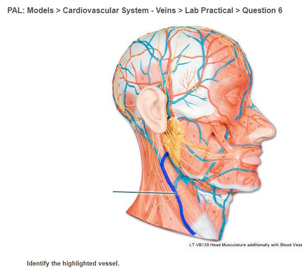 Solved: PAL: Models> Cardiovascular System - Veins>Lab Pra ...