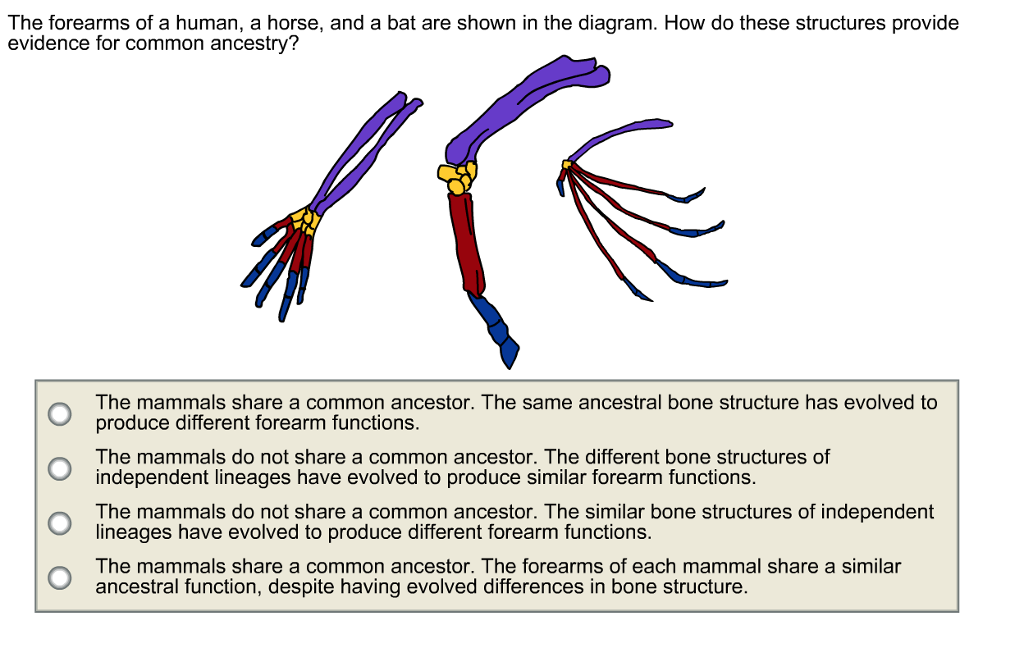solved the forearms of a human a horse and a bat are sh