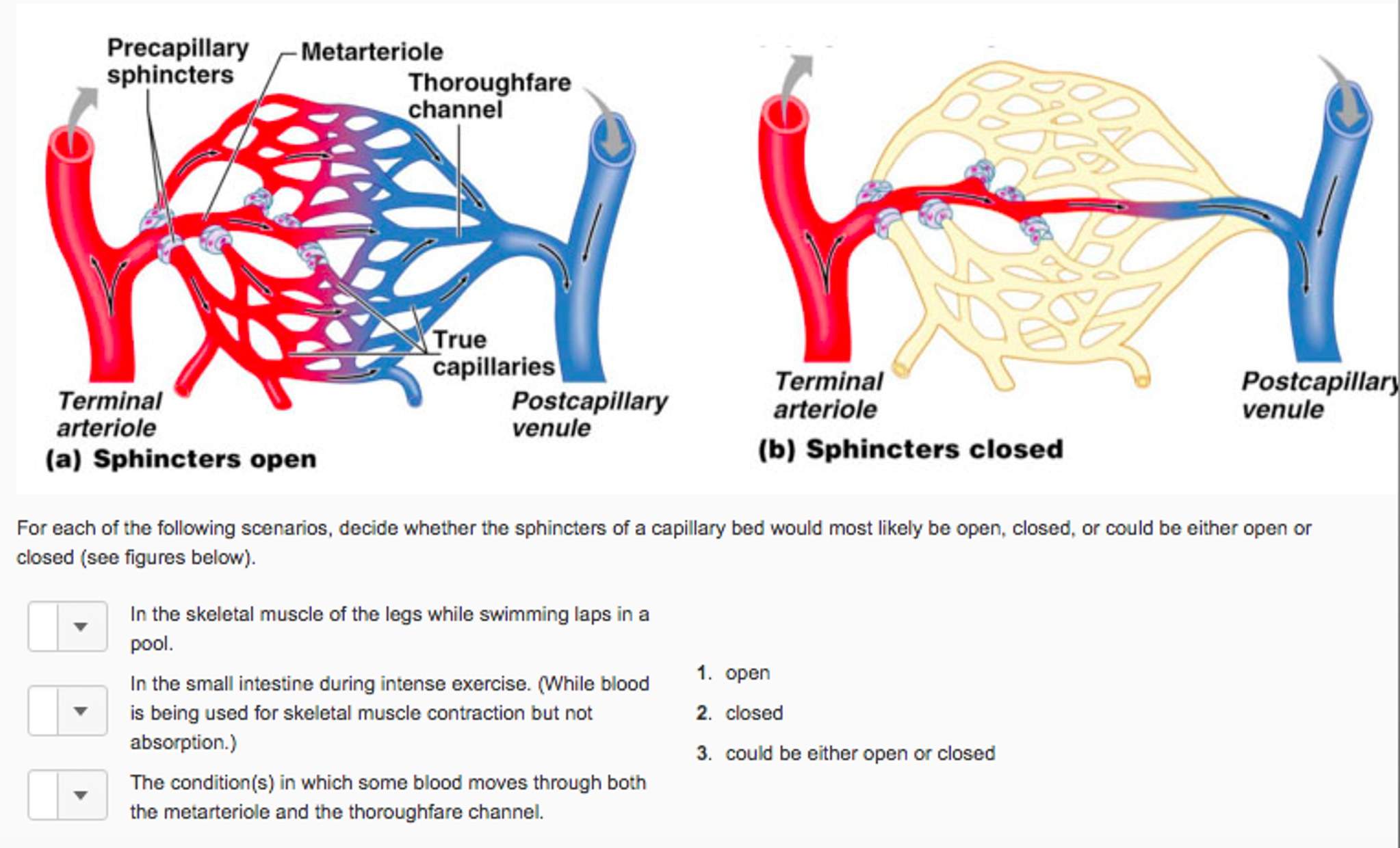Solved: ANATOMY: For Each Of The Following Scenarios, Deci ...