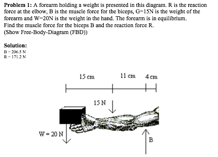 Solved A Forearm Holding A Weight Is Presented In This Di