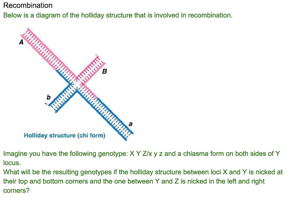 Solved recombination below is a diagram of the holliday s question recombination below is a diagram of the holliday structure that is involved in recombination hol ccuart Images