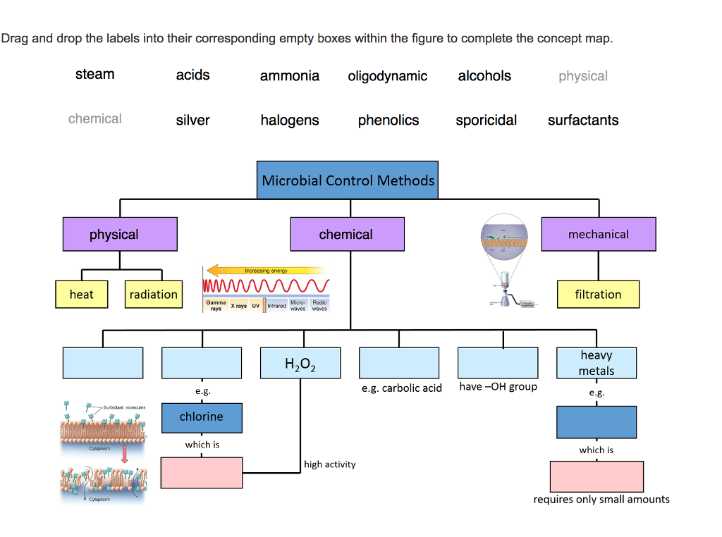 Microbiology Concept Map.Solved Drag And Drop The Labels Into Their Corresponding