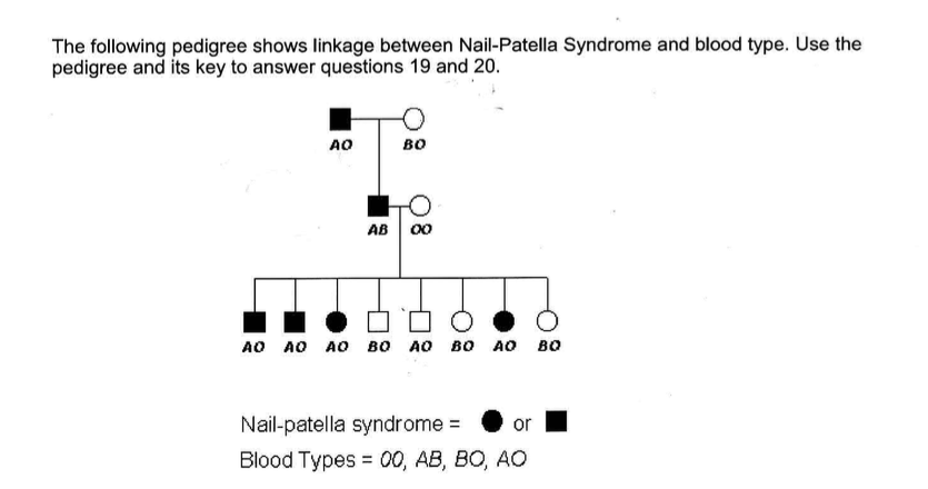 Solved: 19. What Blood-type Allele Is Associated With Nail ...