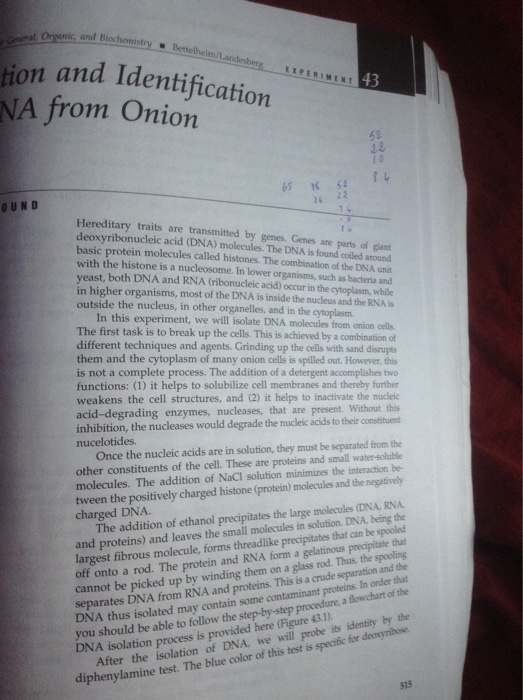 isolation of dna from onion