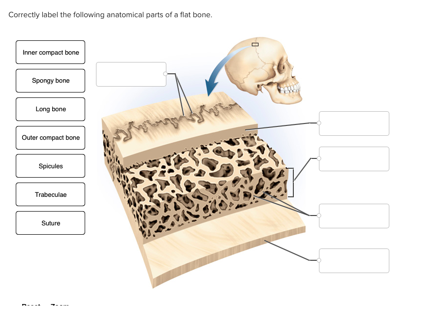 Solved: Correctly Label The Following Anatomical Parts Of ...