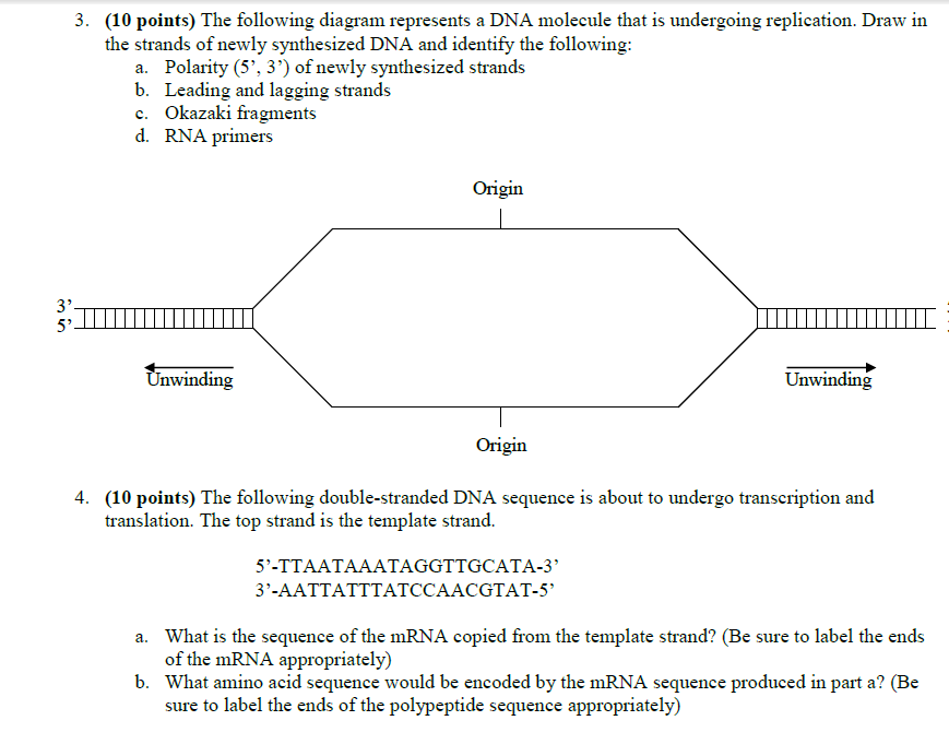 Solved The Following Diagram Represents A Dna Molecule Th