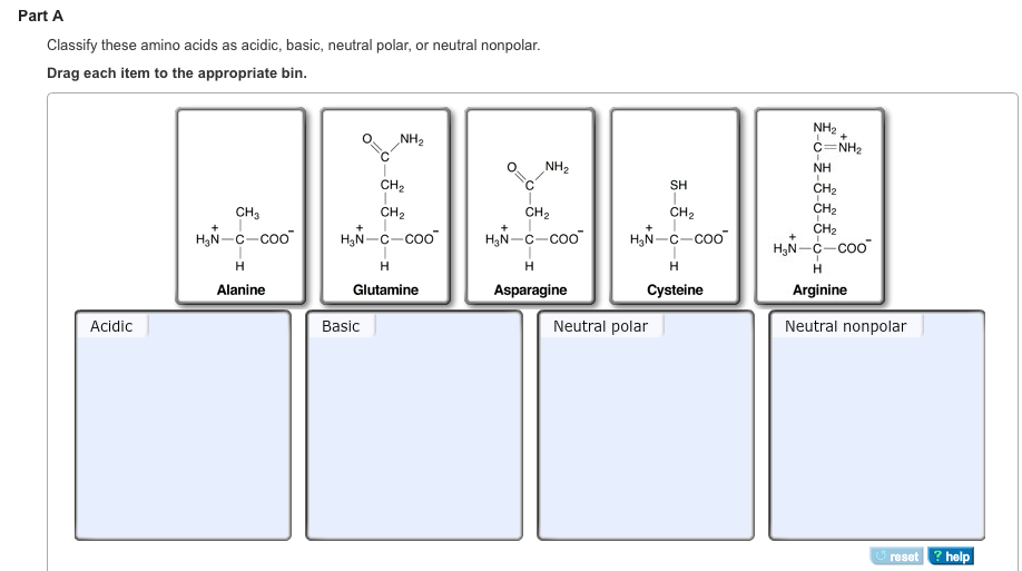 Solved part a classify these amino acids as acidic basic part b altavistaventures Images