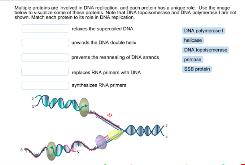 the role of dna in protein Protein synthesis a gene is a segment of a dna molecule that contains the instructions needed to make a unique protein all of our cells contain the same dna molecules, but each cell uses a different combination of genes to build the particular proteins it needs to perform its specialised functions.