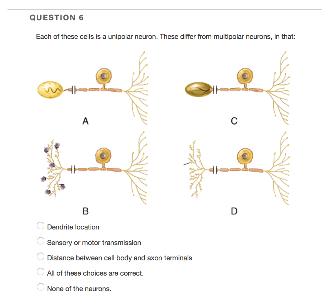 Solved: QUESTION 6 Each Of These Cells Is A Unipolar Neuro ...
