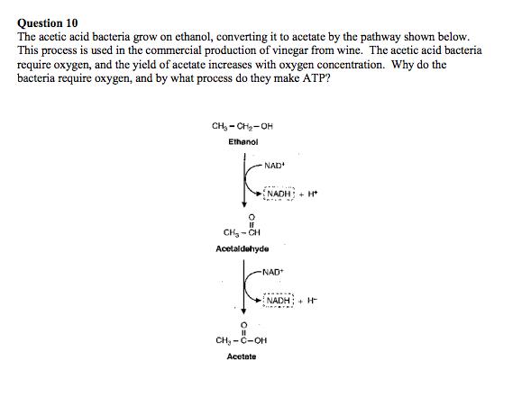 GeoChemBio/MetaMicrobe/Lactic Acid Bacteria