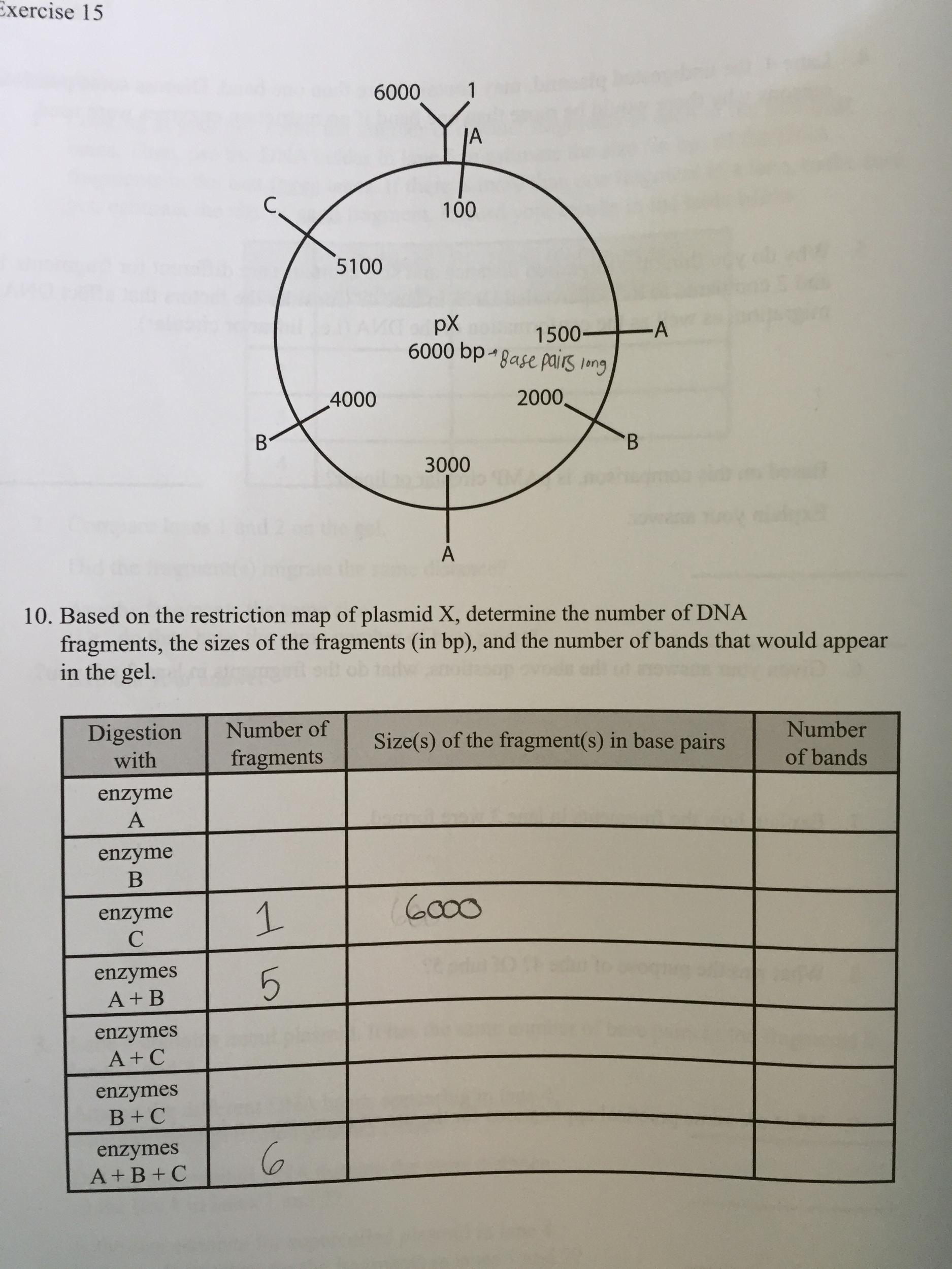 kinetics lab essay View essay - kinetics essay from chem c 126 at indiana university, bloomington westfall1 nathan westfall c126 kinetics lab summary 10/5/14 kinetics.