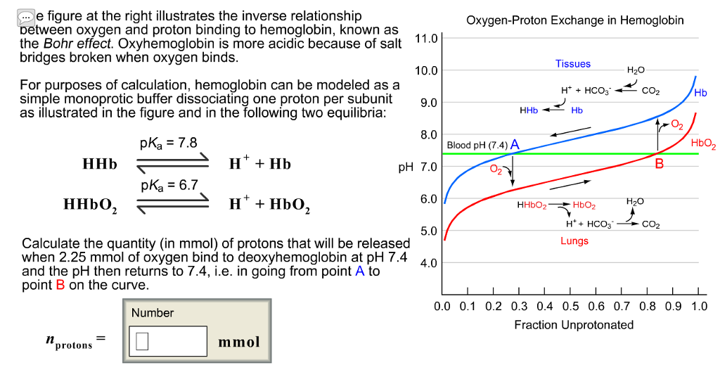 hemoglobin and oxygen relationship help