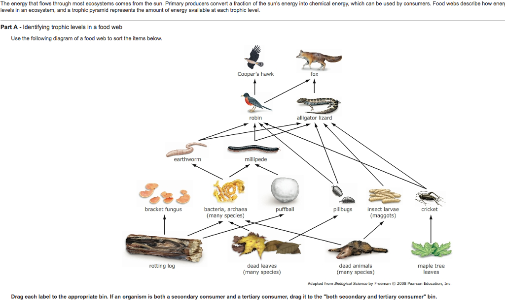 For The Food Web Label Each Organism