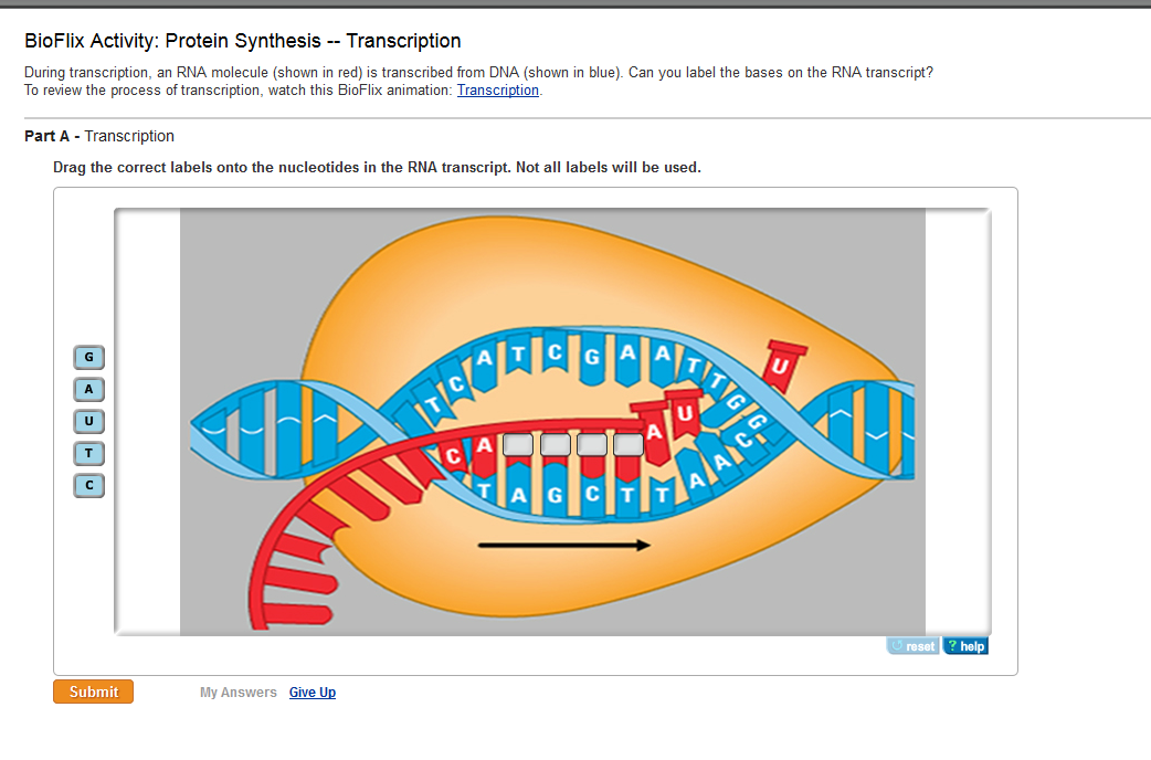 PROTEIN SYNTHESIS TRANSCRIPTION EBOOK