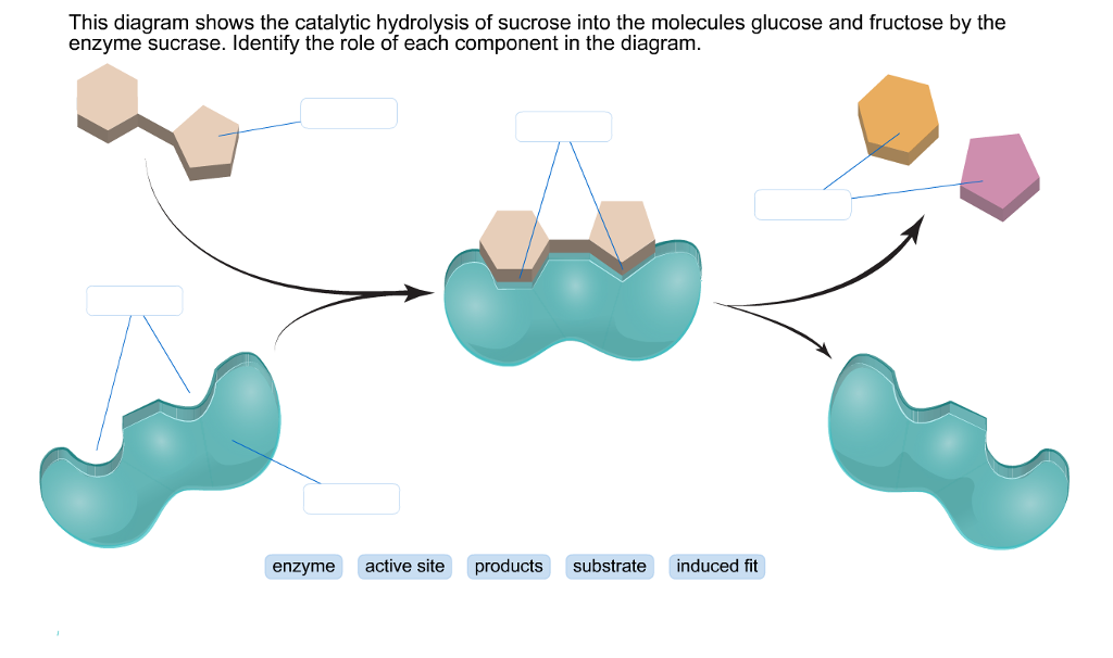Enzyme Research