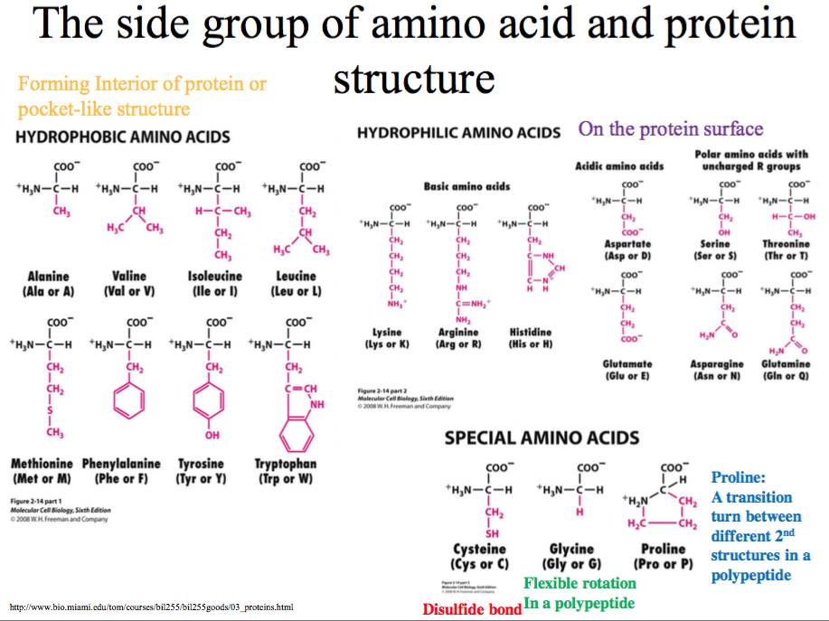 protein and amino acids relationship with god