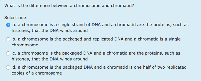 explain the relationship between terms chromosome and chromatid