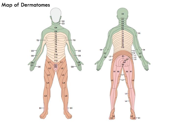 t8 dermatome choice image
