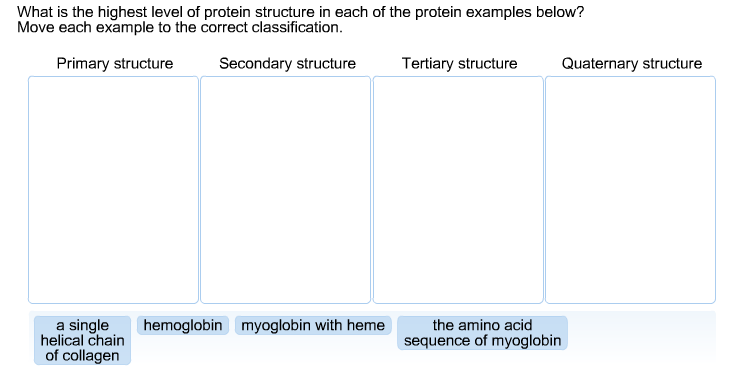 Solved What Is The Highest Level Of Protein Structure In