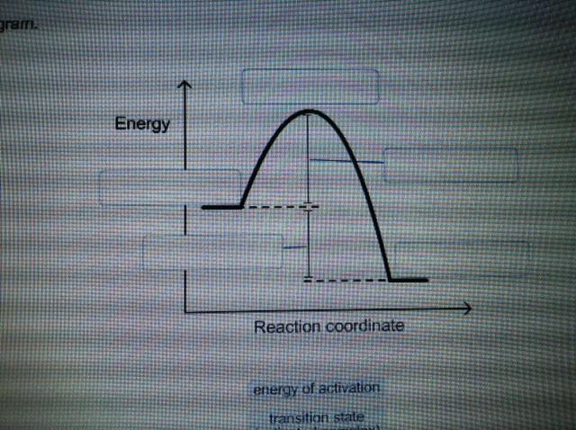 solved label this diagram energy of activations transit. Black Bedroom Furniture Sets. Home Design Ideas