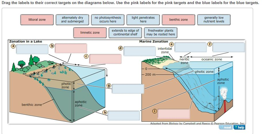 Solved Zones In Lakes And Oceans Are Delineated By Depth