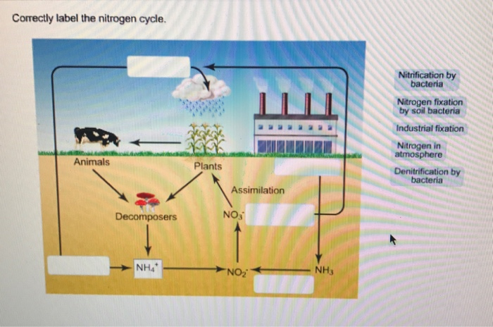 solved correctly label the nitrogen cycle animals plants. Black Bedroom Furniture Sets. Home Design Ideas